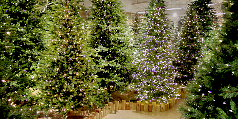 more information on our christmas trees